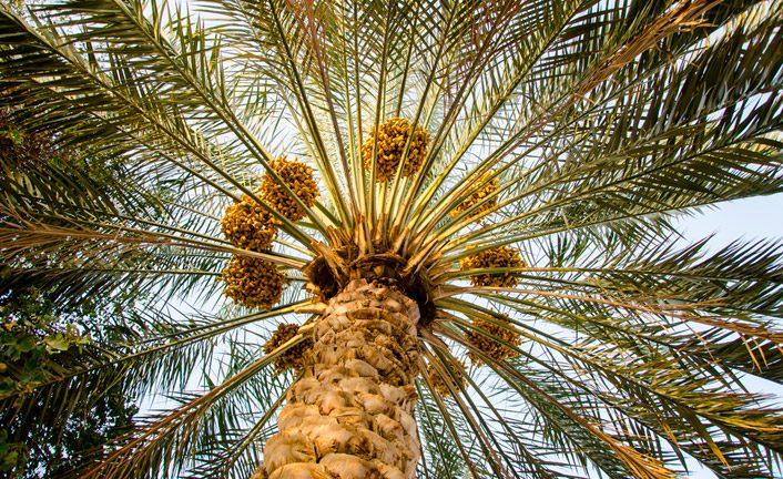 Like a palm tree…