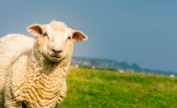 La primera oveja