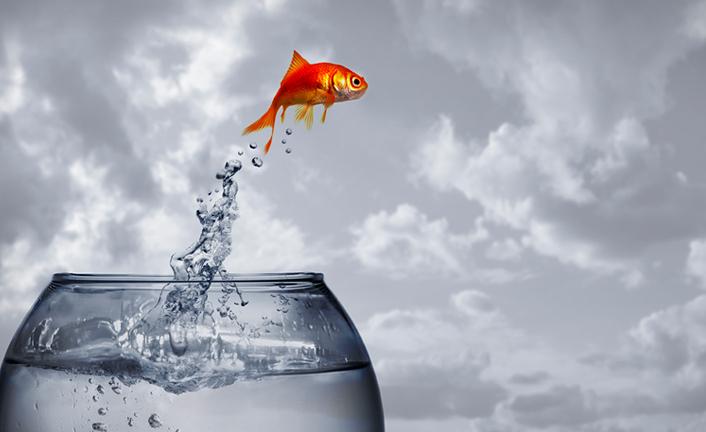 Como un pez fuera del agua…
