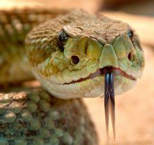serpente-706x432