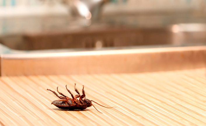 Глупые тараканы