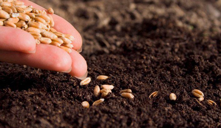Слуга и зерно