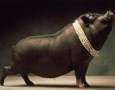 Pérolas a Porcos