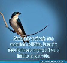 Pássaro sobre um galho