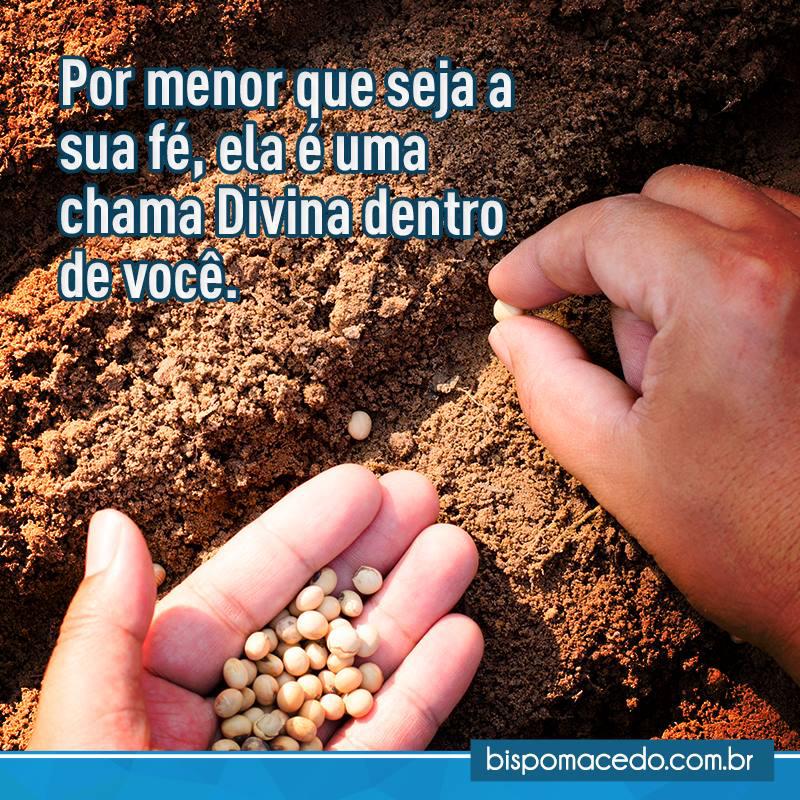 Mãos plantando sementes na terra